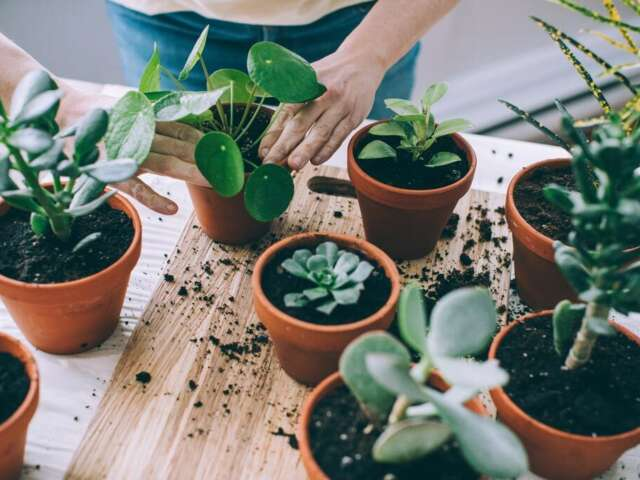 Come & Try: Indoor Plants