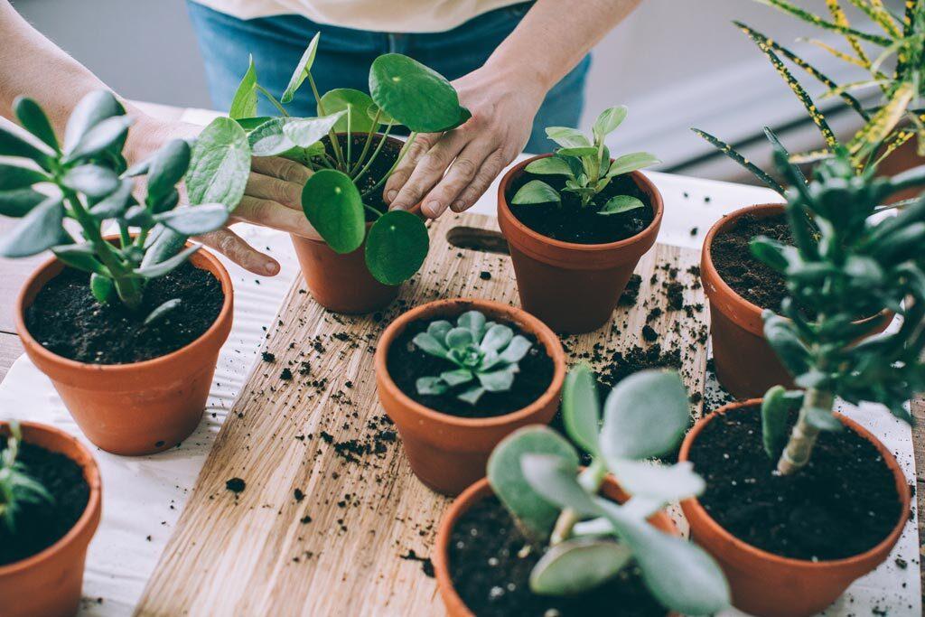 Come & Try: Indoor Plants